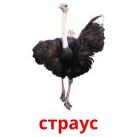 страус picture flashcards