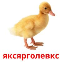яксярголевкс picture flashcards