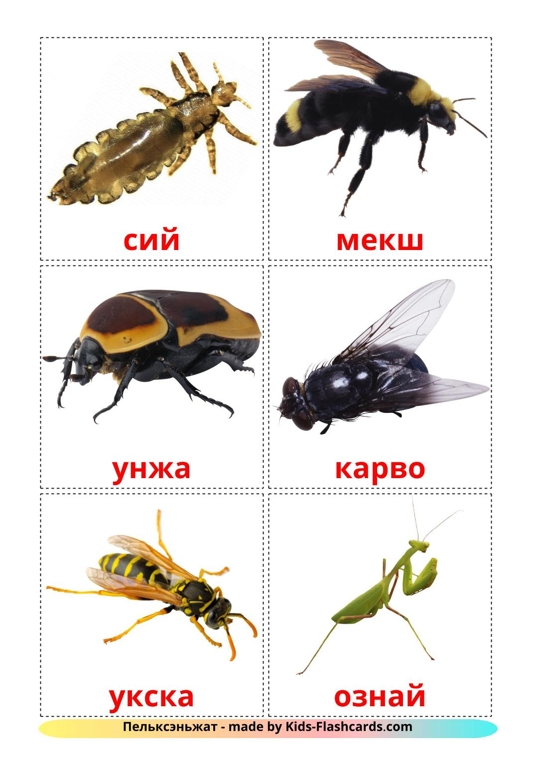 Insects - 23 Free Printable erzya Flashcards