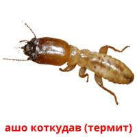 ашо коткудав (термит) picture flashcards