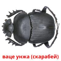 ваце унжа (скарабей) picture flashcards