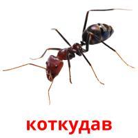 коткудав picture flashcards
