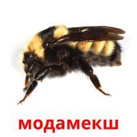 модамекш picture flashcards