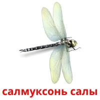 салмуксонь салы picture flashcards