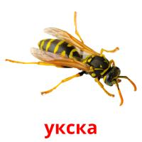 укска picture flashcards