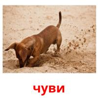 чуви picture flashcards