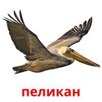 пеликан picture flashcards