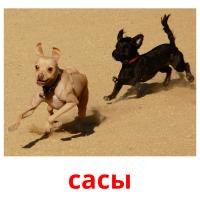сасы picture flashcards
