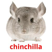 chinchilla picture flashcards