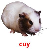 cuy picture flashcards