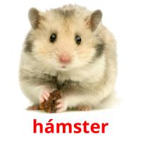hámster picture flashcards