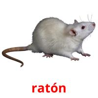ratón picture flashcards