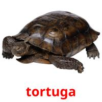 tortuga picture flashcards