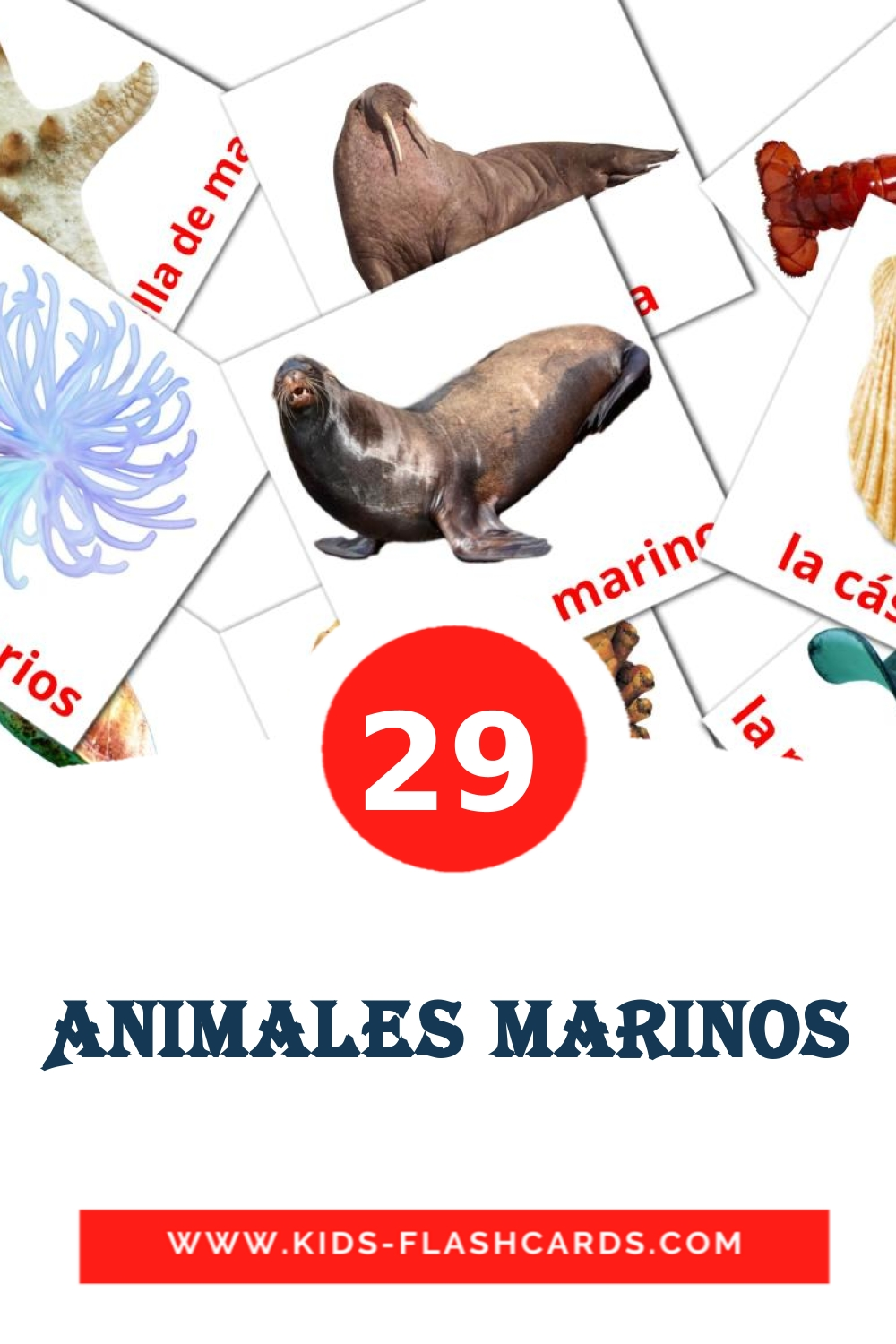 29 Animales Marinos Picture Cards for Kindergarden in spanish