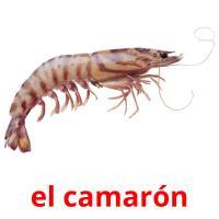 el camarón picture flashcards