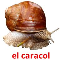 el caracol card for translate