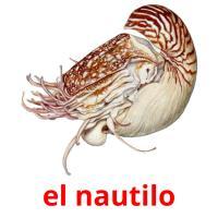 el nautilo picture flashcards