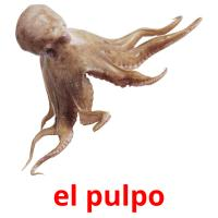 el pulpo card for translate