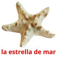 la estrella de mar picture flashcards