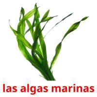 las algas marinas picture flashcards