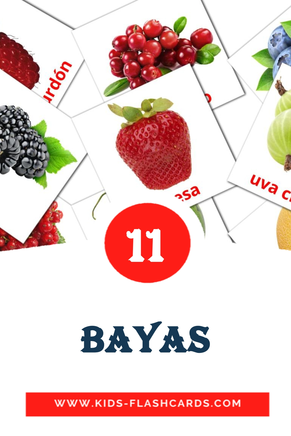 11 Bayas Picture Cards for Kindergarden in spanish