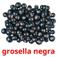 grosella negra picture flashcards