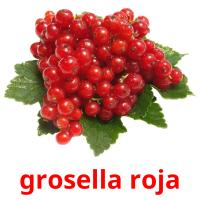 grosella roja picture flashcards