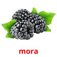 mora picture flashcards