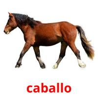 caballo picture flashcards