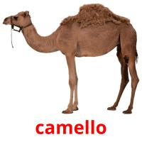 camello picture flashcards