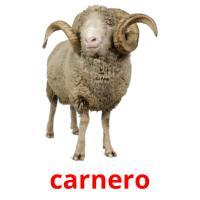 carnero picture flashcards