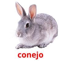 conejo picture flashcards