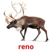 reno picture flashcards