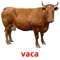 vaca picture flashcards