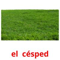 el  césped card for translate