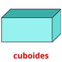 cuboides picture flashcards