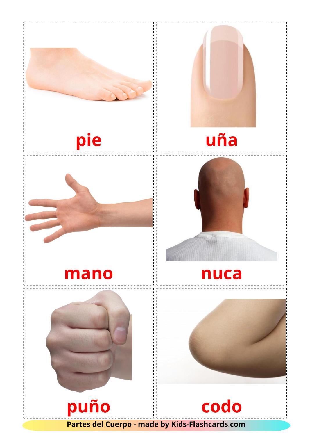Body Parts - 26 Free Printable spanish Flashcards