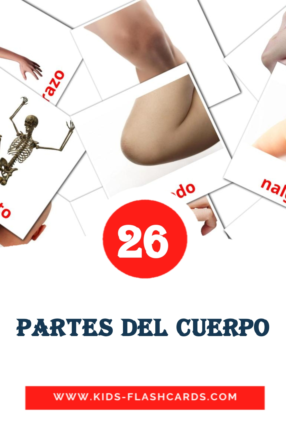 26 Cuerpo Picture Cards for Kindergarden in spanish