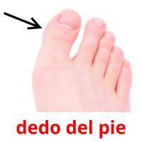 dedo del pie picture flashcards
