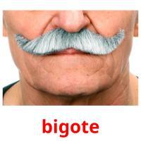 bigote picture flashcards