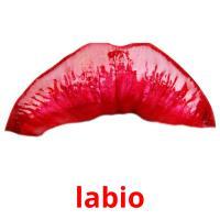 labio card for translate