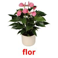 flor picture flashcards