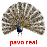 pavo real picture flashcards