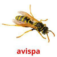 avispa picture flashcards
