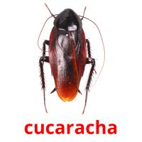 cucaracha picture flashcards