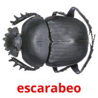escarabeo picture flashcards