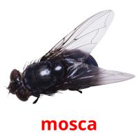 mosca picture flashcards