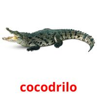 cocodrilo picture flashcards