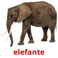 elefante picture flashcards
