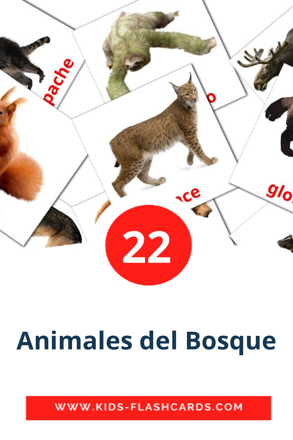 22 Animales del Bosque Picture Cards for Kindergarden in spanish